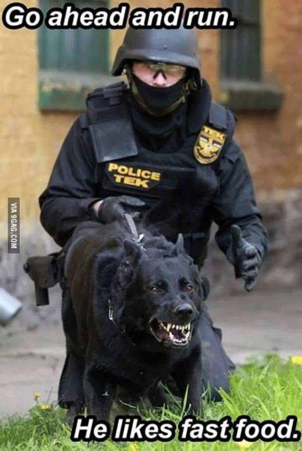Canine5