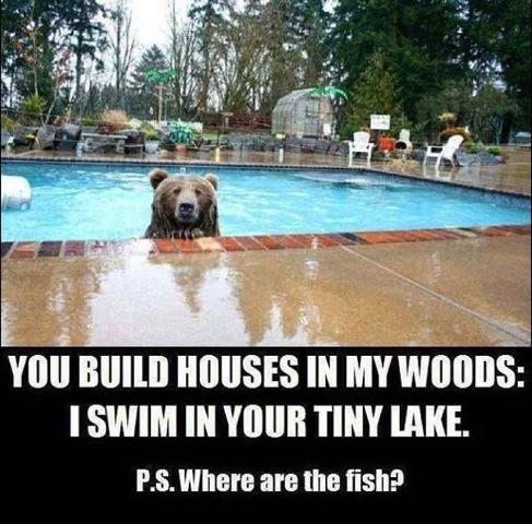 08 - Bear in Pool