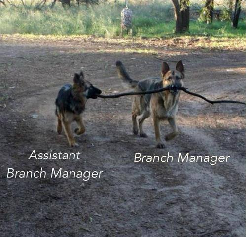 10 - Branch Manager