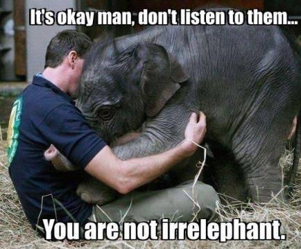 12 - Irrelephant
