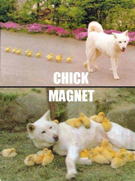 13 - Chick Magnet