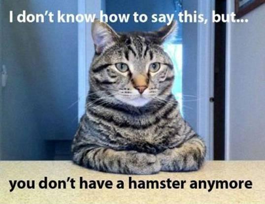 26 - No Hamster